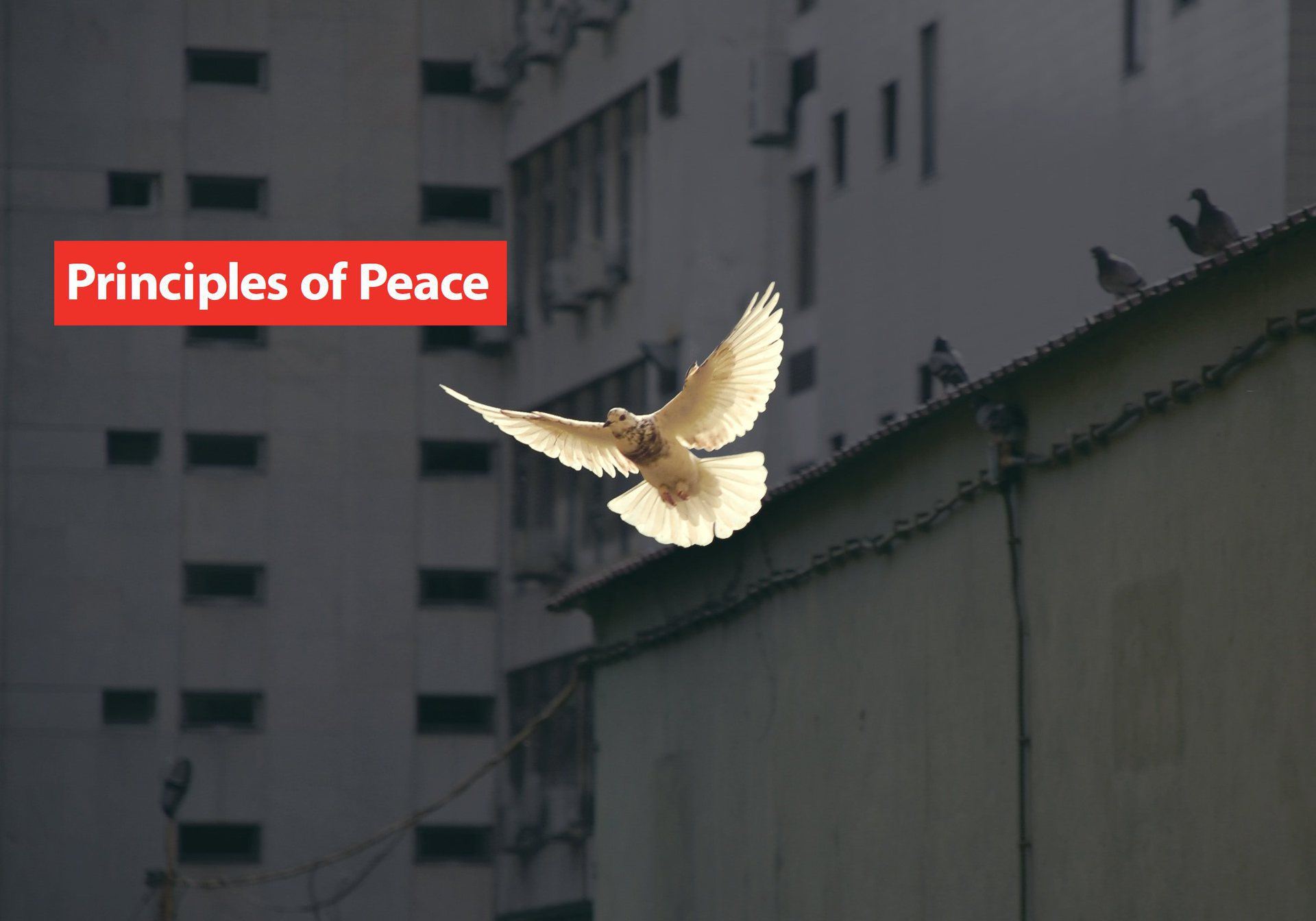 principles-of-peace-image